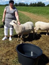 Kuvassa maaseutuyksikön päällikkö Ritva Rintapukka silittää lammasta.