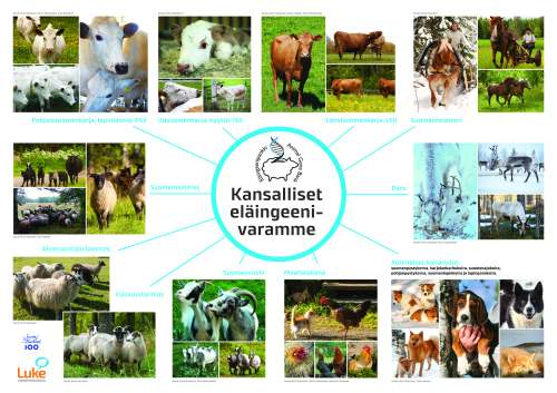 Kuvassa näkyvät kansalliset eläingeenivaramme eli kuvia erilaisista eläimistä.