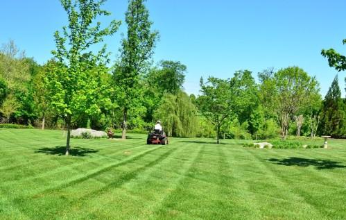 Nuori kesätyöntekijö leikkaamassa nurmikkoa.