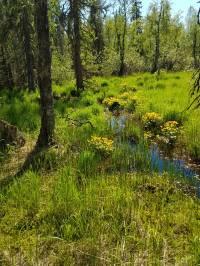 Kuvassa värikäs puromaisema.