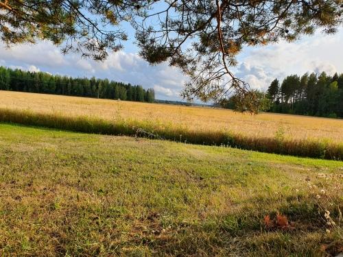 Peltomaisema, jossa nurmikkoa ja viljaa.