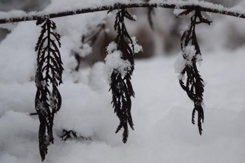 Luminen pensaan oksa, josta roikkuu kasvustoa.