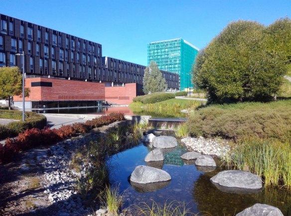 Kuvassa on näkvissä rakennuksia ja niiden vieressä hulevesille varattua viheraluetta ja puistoa.