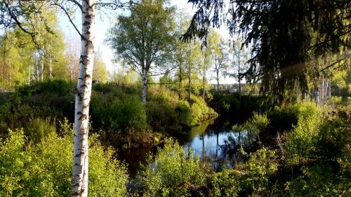 Keväinen kuva joesta, jonka ympärillä kasvusto on erityisen vihkeää.