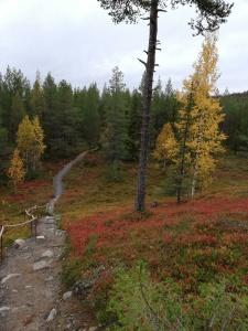Polku ja luontoa ruskan väreissä.