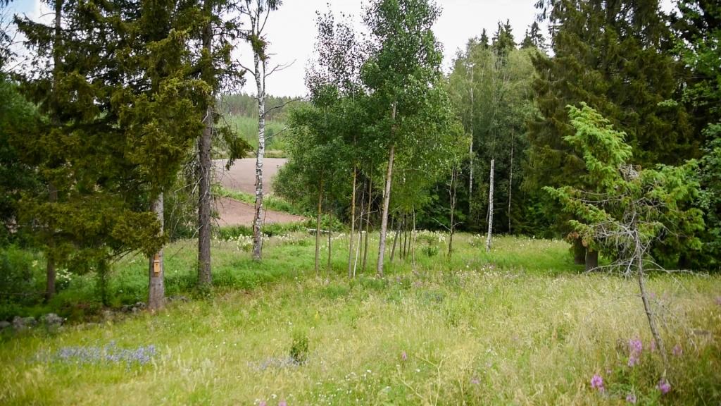 Vehreä maisema, jonka etualalla näkyy kuivempaa heinikkoa ja joitain kukkia. Rinteessä hieman alempana heinikko on vihreämpää ja tuuheampaa ja sen seassa kasvaa puita. Kauimpana kuvanottopaikasta näkyy multaista peltoaluetta. Peltoalueen ja vihreän heinikon välissä virtaa uoma.