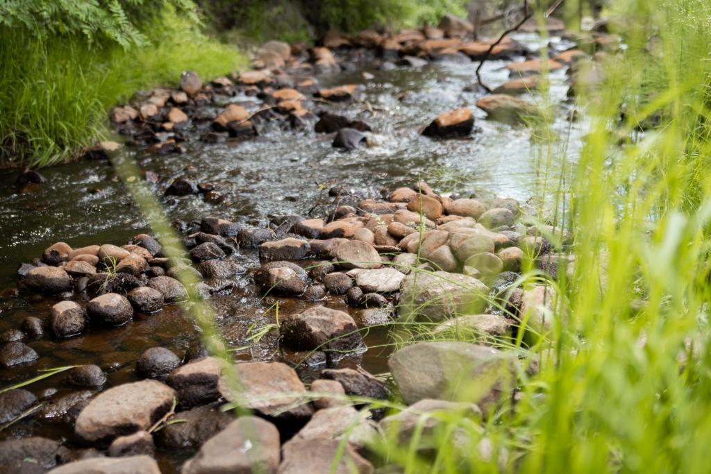 Lähikuva virtaavan puron pohjalla olevista kivistä. Kiviä on runsaasti ja ne peittävät noin puolet kuvatun puron pinta-alasta. Puron reunoilla näkyy vihreää heinikkoa.