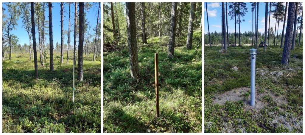 Kolme erillistä kuvaa metsämaastossa sijaitsevista putkista. Putket nousevat maasta arviolta  metrin ja ovat kaikki suoria ja hyväkuntoisen näköisiä.