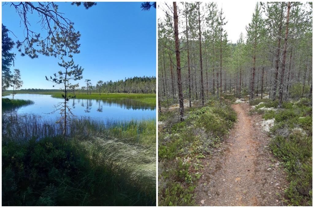Kaksi erillistä miasemakuvaa. Vasemmalla lampimaisema, jonka ympärillä kirkkaan vihreää suokasvillisuutta. Taivas on sininen ja se heijastuu lammen pinnasta. Oikealla metsämaisema, jonka keskellä kulkee polku, maisemassa on paljon pienikokoisia havupuita, joiden rungot näkyvät ja latvoissa on harvakseltaan oksia. Maassa on vihreitä varpuja sekä jäkälää.