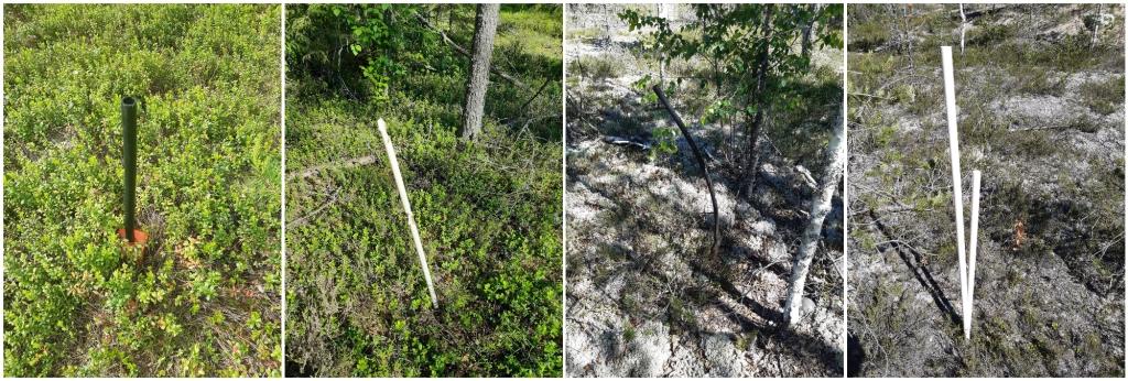 Neljä erillistä kuvaa metsämaastossa sijaitsevista putkista. Putket nousevat maasta noin metrin verran. Osa putkista on vinossa tai vääntynyt, ja yksi haljennut keskeltä kahtia.