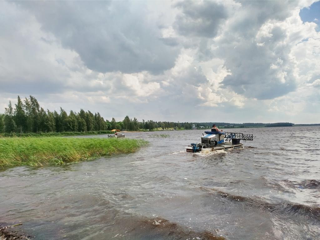 Rannasta otettu kuva, jossa näkyy rantakaislikkoa sekä aaltoileva järvi. Kaislikon läheisyydessä on vedessä ajettava niittokone.